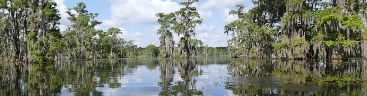 Swamp_Tour_Louisiana_4